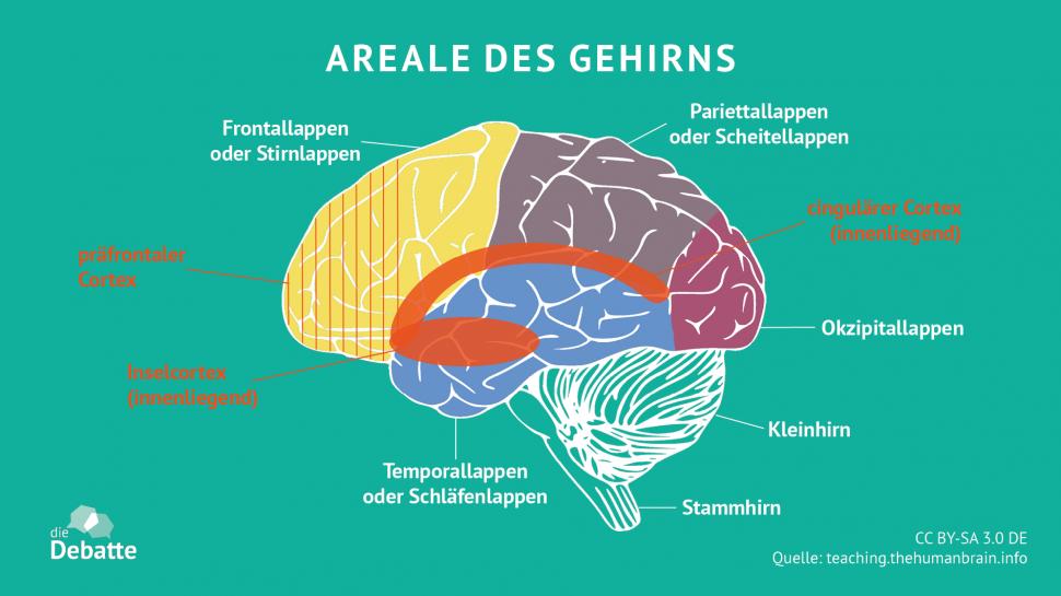 Intelligenz: Die Anatomie intelligenter Gehirne